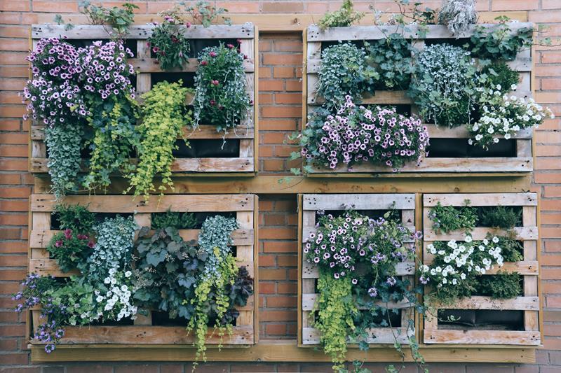 Horta em caixas em apartamento