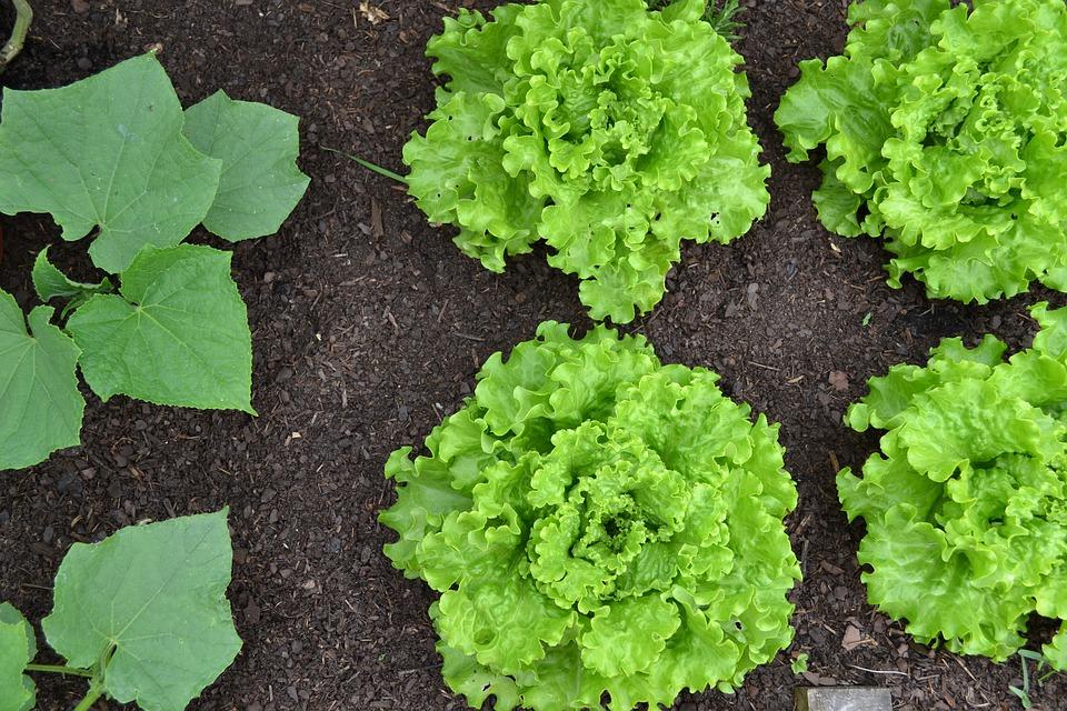 Horta caseira: melhor maneira de começar uma alimentação saudável