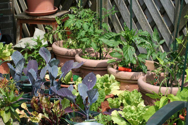 Plantas em vasos também são ótimas opções